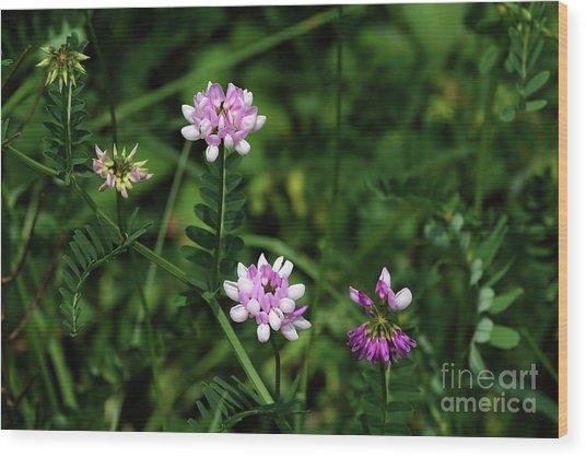 Wildflowers Northford Wood Print