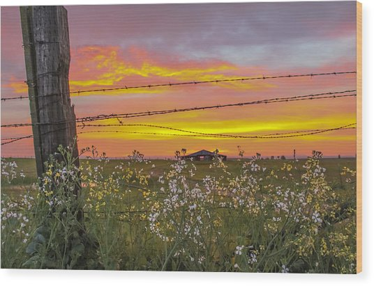 Wildflowers On The Ranch Wood Print