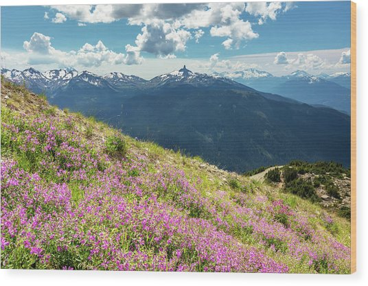 Wood Print featuring the photograph Wildflowers On Whistler Mountain by Pierre Leclerc Photography