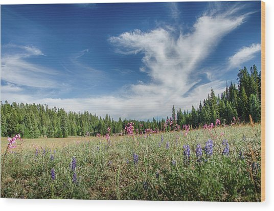 Wildflowers Reach For The Sky Wood Print