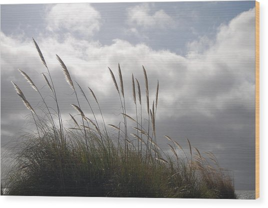 Wildgrass Wood Print by Jean Booth