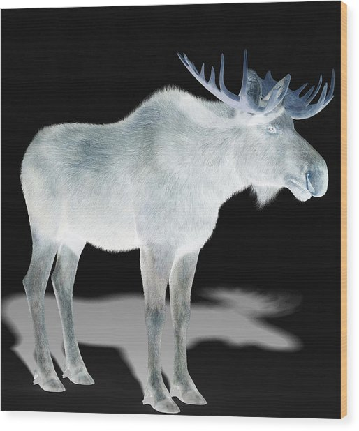 Wildlife Moose Wood Print