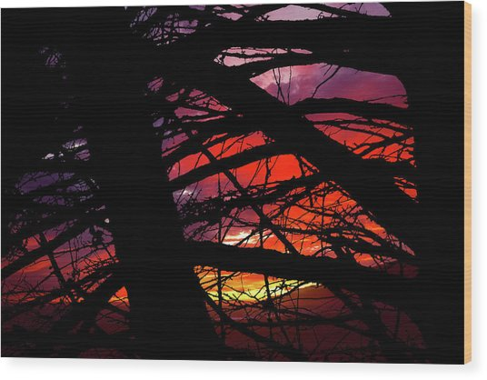 Wildlight Wood Print