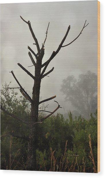 Wilds Of Myakka 008 Wood Print