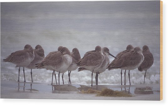 Willets  Wood Print