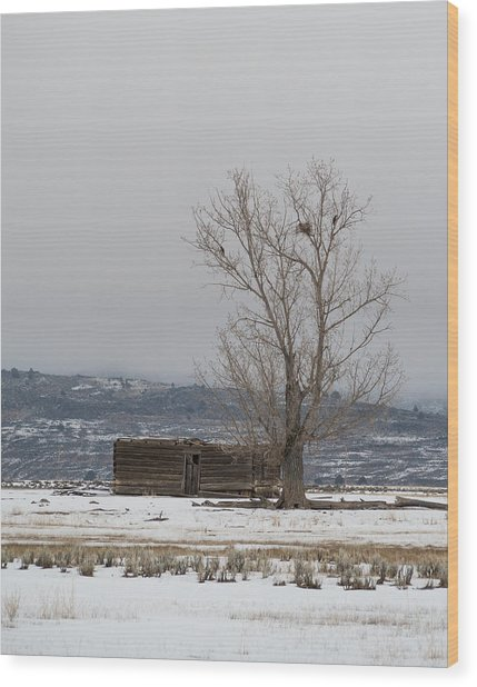 Willow Creek Cabin Wood Print