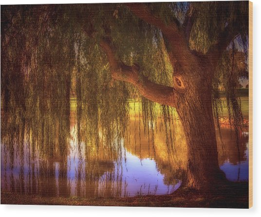Willow Glow Wood Print