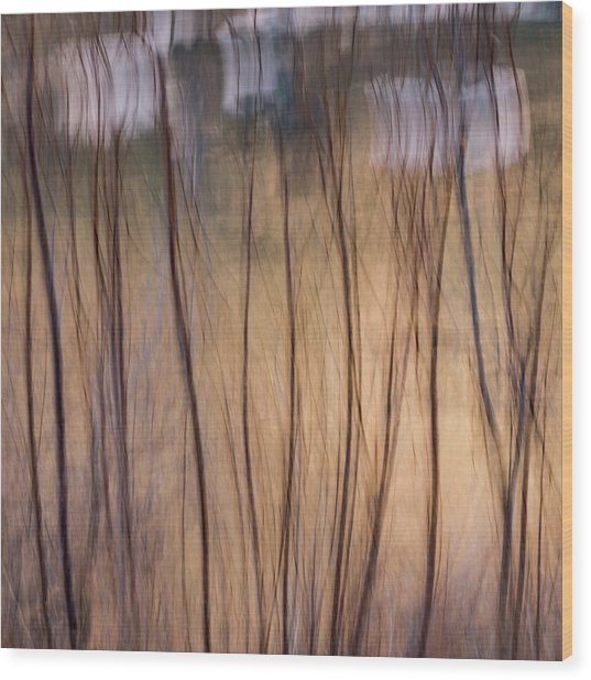 Willows In Winter Wood Print