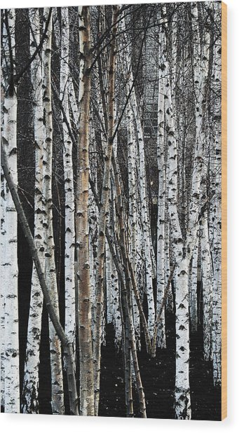 Wood Print featuring the digital art Birch by Julian Perry