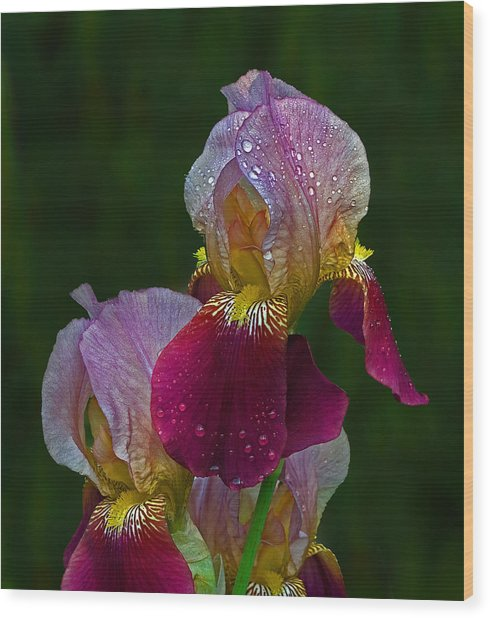 Willowwood Iris Wood Print