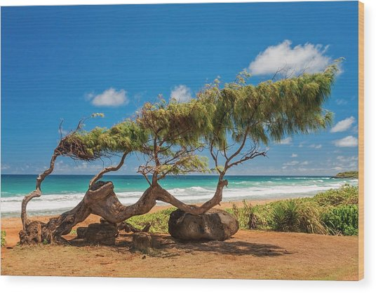 Wind Blown Tree Wood Print