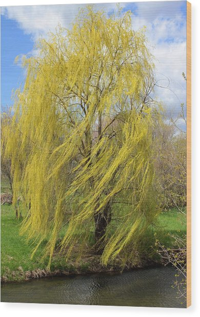 Wind In The Willow Wood Print