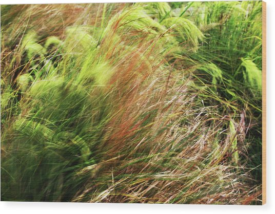 Windblown Grasses Wood Print