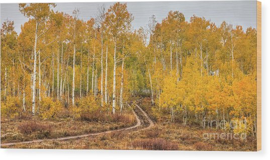 Wood Print featuring the photograph Winding Autumn Road by Spencer Baugh