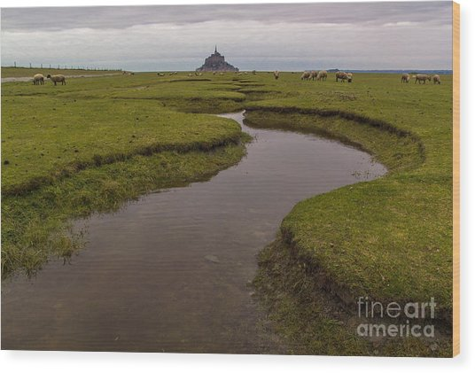 Winding In The Mont Saint-michel Bay Wood Print