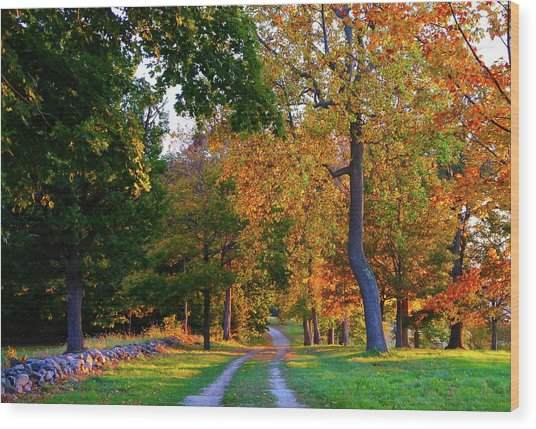 Winding Road In Autumn Wood Print