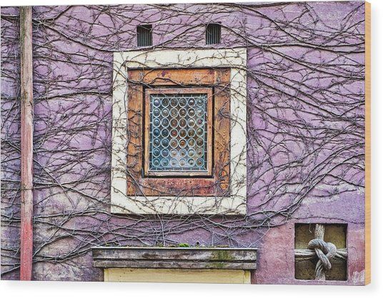 Window And Vines - Prague Wood Print