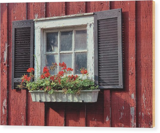 Window Box Wood Print by Dressage Design
