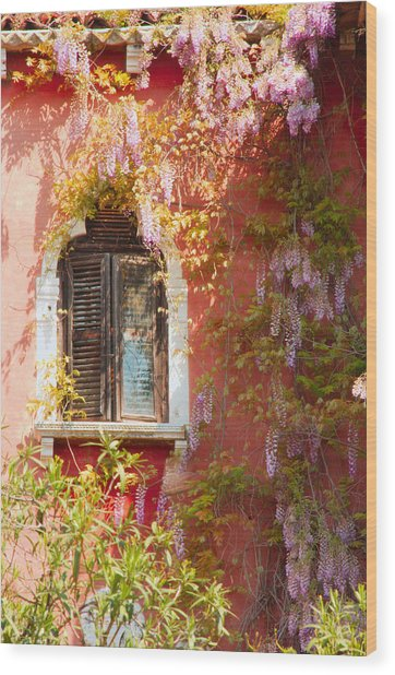 Window In Venice With Wisteria Wood Print by Michael Henderson