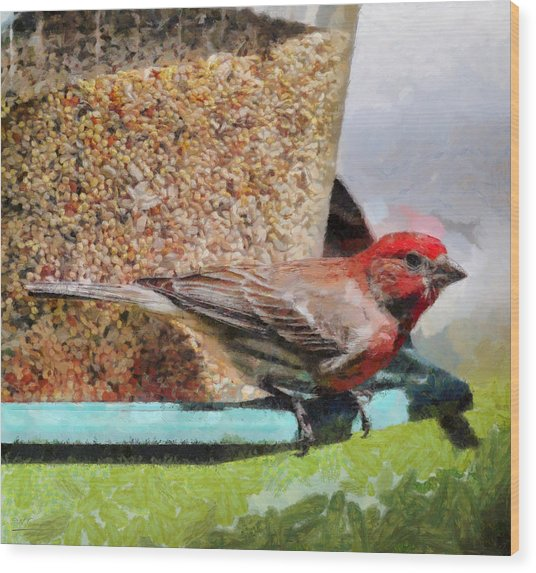 Windsor House Finch Wood Print
