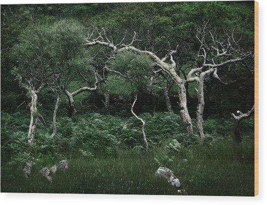 Windswept Wood Print by Warren Home Decor