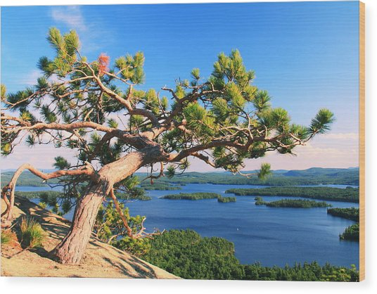 Windswept Pine On Rattlesnake Mountain Wood Print