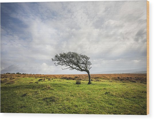 Windswept Tree Wood Print