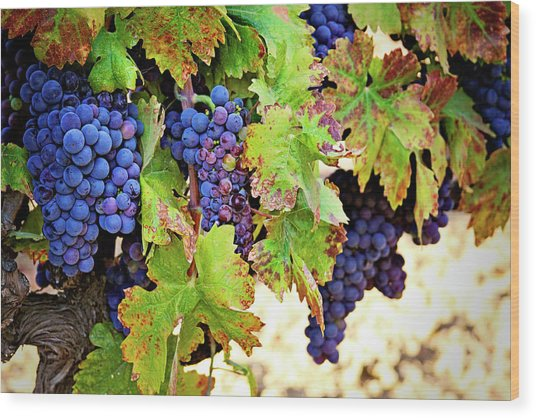 Wine Country - Napa Valley California Photography Wood Print