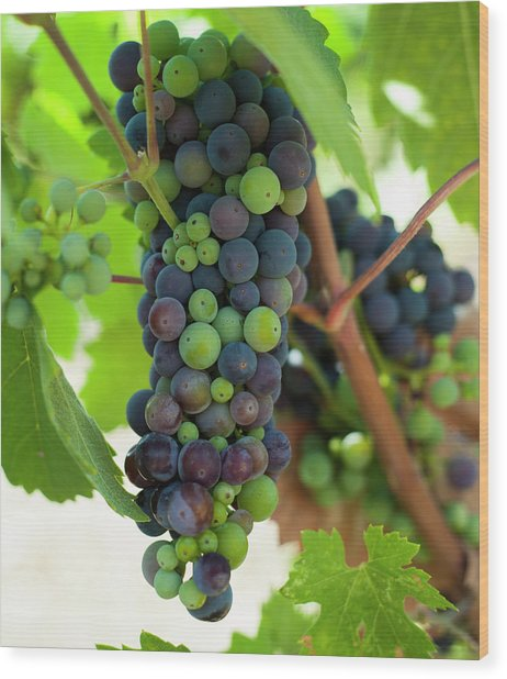 Wine Grapes Wood Print by Sharon West