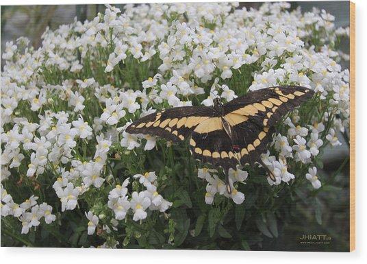 Wing Span Wood Print