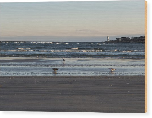 Wingaersheek Beach Seagulls At Sunrise Wood Print