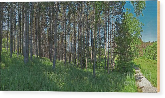 Wingate Prairie Veteran Acres Park Pines Crystal Lake Il Wood Print