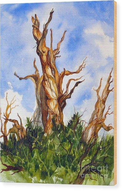Winged Bristlecone Wood Print