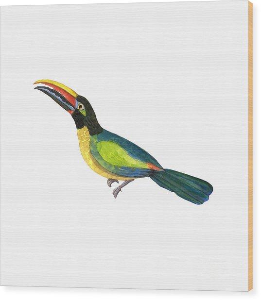 Winged Jewels 2, Watercolor Toucan Rainforest Birds Wood Print