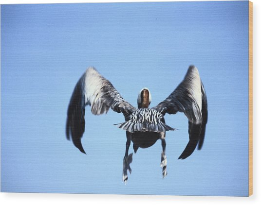 Wings In Position And Flaps Down Wood Print by Carl Purcell