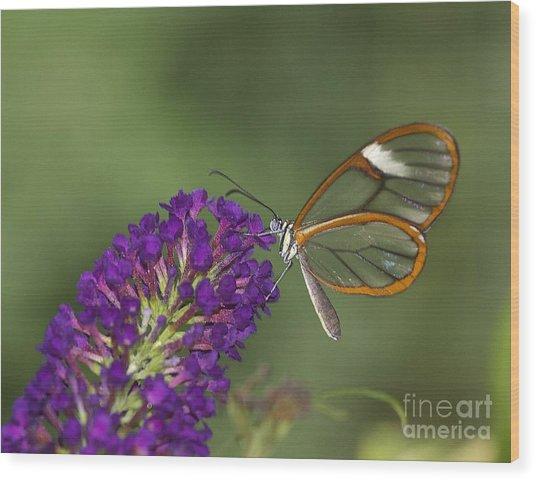 Wings Like Glass Wood Print