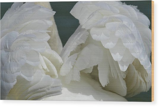 Wings Of White Wood Print