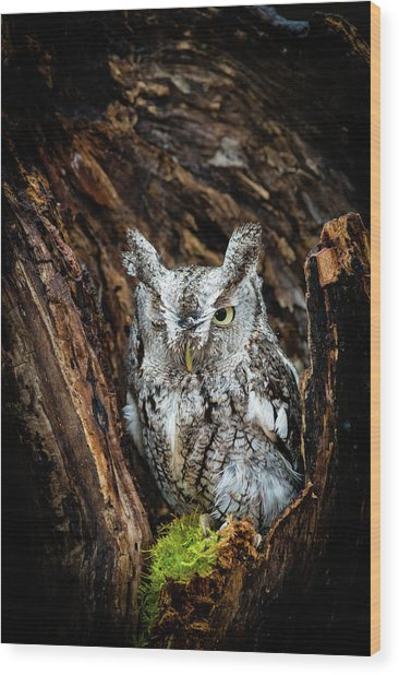 Wink, Wink Wood Print by Tracy Munson