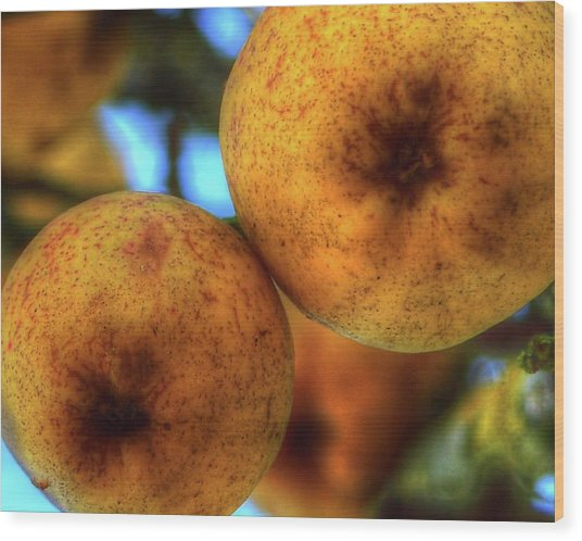 Winter Apples 2 Wood Print