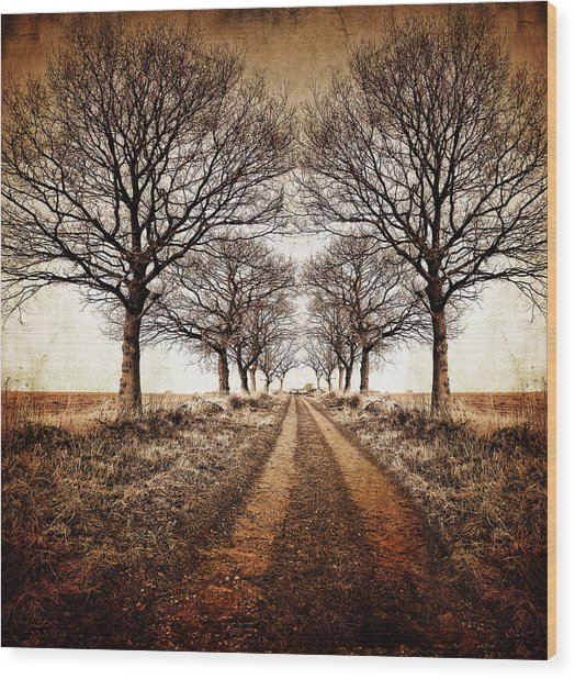 Winter Avenue Wood Print