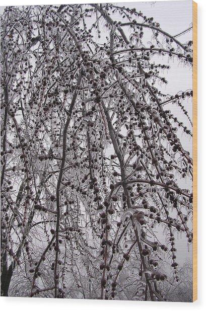 Winter Beauty Wood Print by Audrey Venute