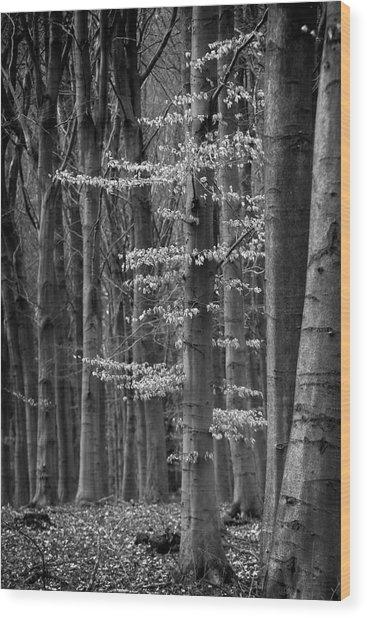 Winter Beech Wood Print