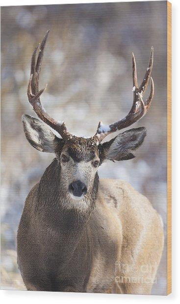 Winter Buck II Wood Print