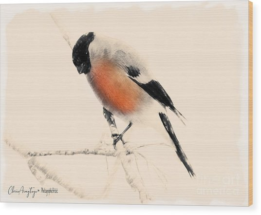 Winter Bullfinch Wood Print