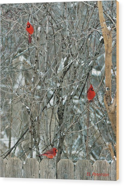 Winter Cardinals Wood Print