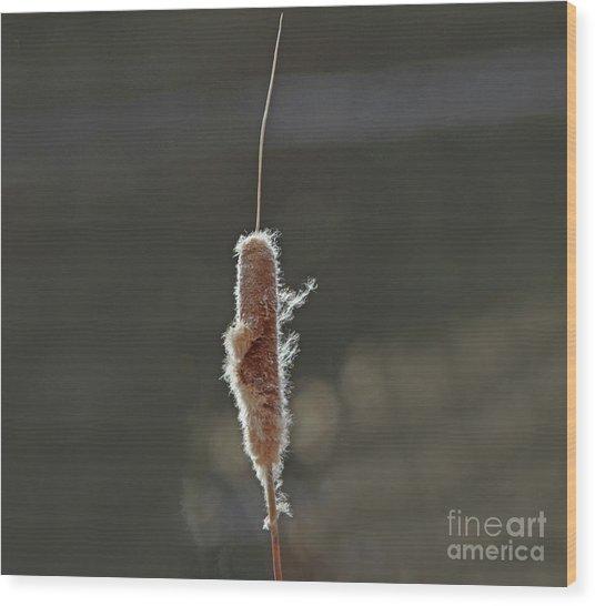 Winter Cattail  Wood Print