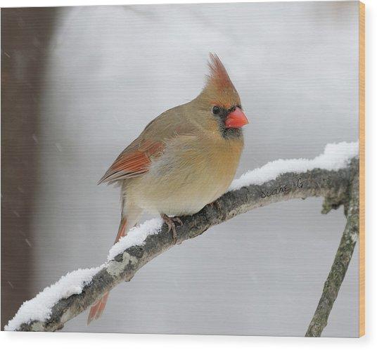 Winter Female Cardinal Wood Print
