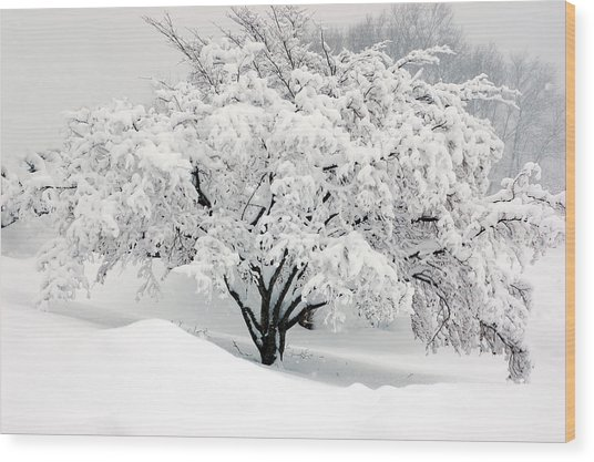 Winter Fluff Wood Print