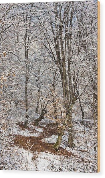 Winter Forest Wood Print by Gabriela Insuratelu