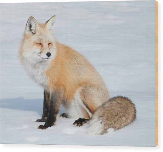 Winter Fox Wood Print